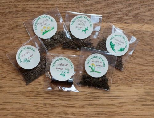 Biodynamic Seed Starting Experiment