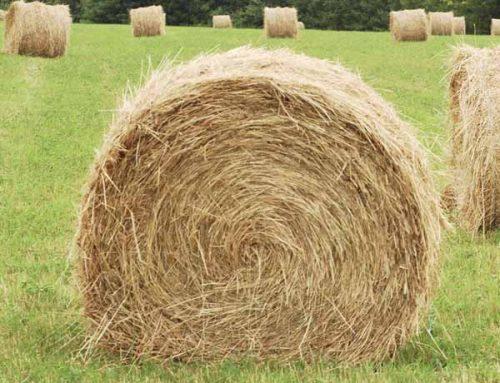 Beasts – Round hay bales